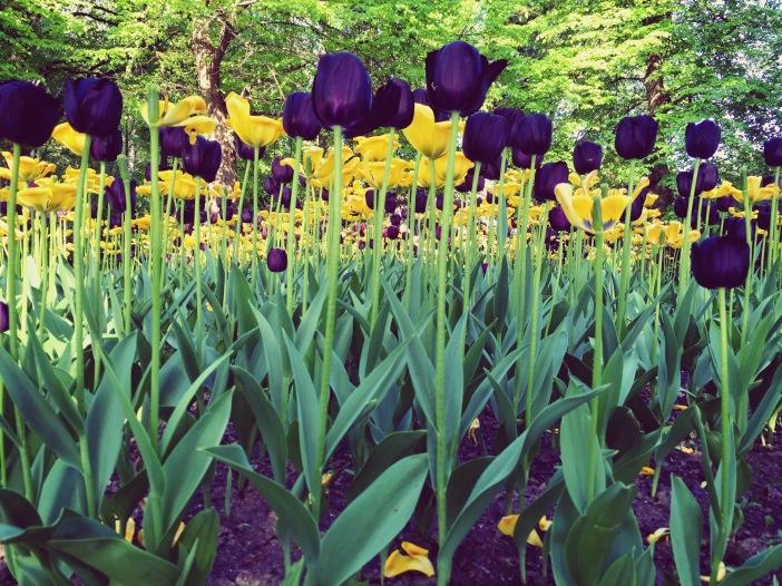 Arboretum_FeatherOnTheMove